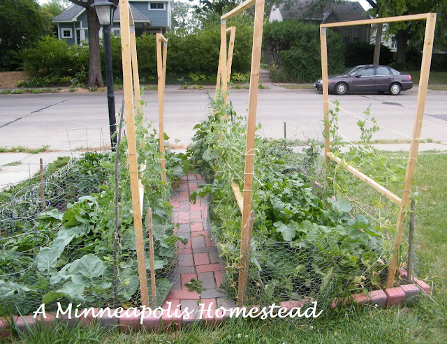 How to build a wooden trellis minneapolis homestead - Building trellises property ...
