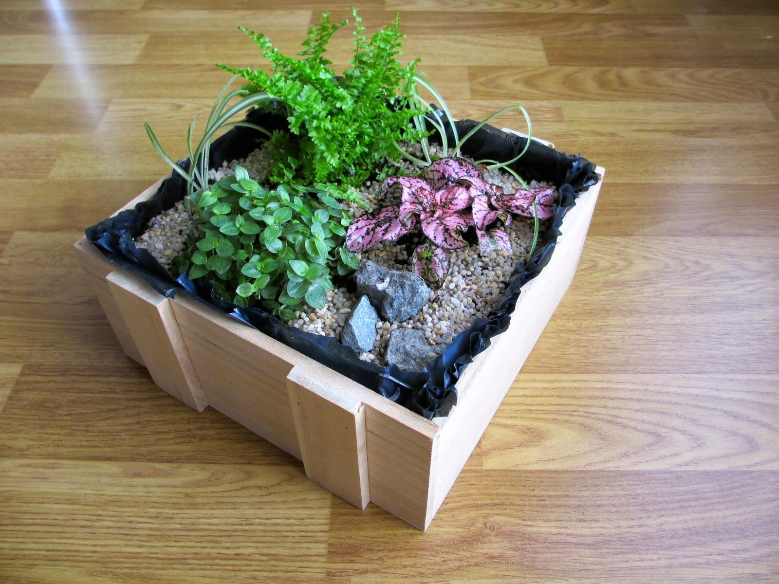 Ils Poussent Un Peu Partout Sur Le Net En Ce Moment : Les Mini Jardins Du0027 Intérieur. Cactus Ou Plantes Vertes Font Entrer Un Petit Bout De Verdure  Dans Nos ...