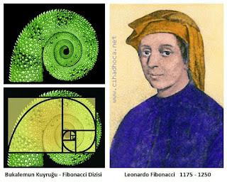 Fibonacci Hayatı - Altın Oran - Fibonacci Sayı Dizisi