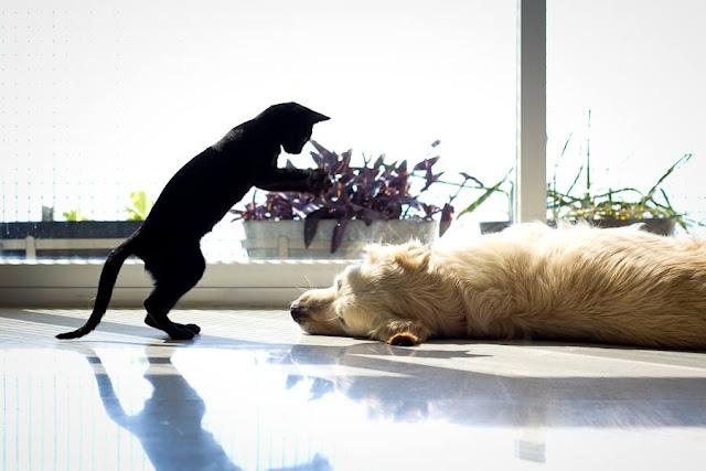 Mi gata Velvet jugando con mi perro Garu