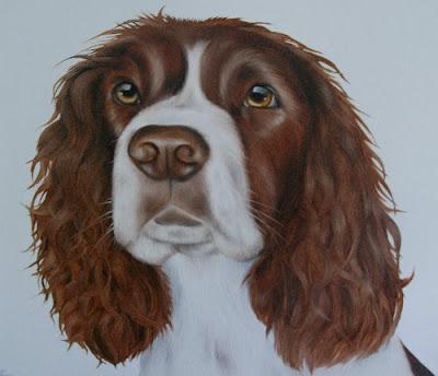 Springer Spaniel Pet Portrait Oil on Canvas