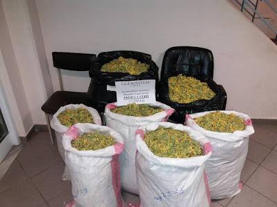 Συνελήφθησαν δύο αλλοδαποί με  ποσότητα αρωματικού-φαρμακευτικού φυτού, βάρους 112 κιλών και 900 γραμμαρίων
