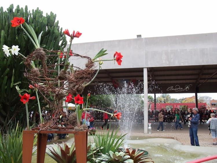 decoração festa holambra 2013