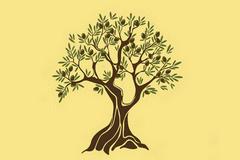 Zeytin Ağacı Duvar Kağıtları