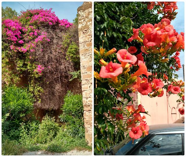 kwitnące kwiaty na Krecie, gdzie zobaczyć?