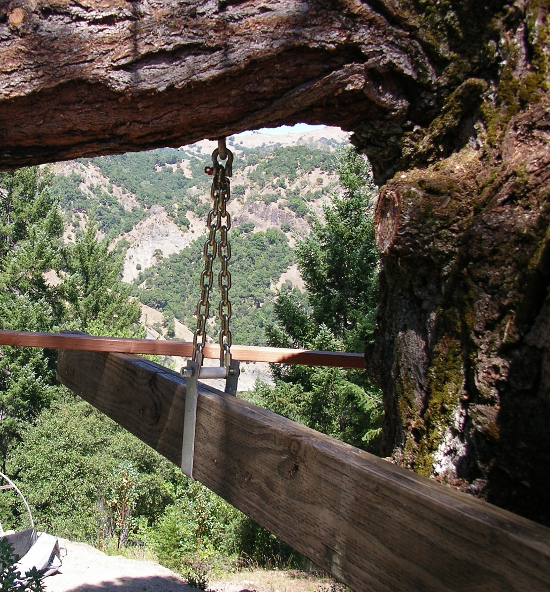 Suspended Decking: Priority Tree: Suspended Tree House, (deck