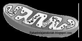 Cabang ilmu biologi yang mempelajari bermacam proses kehidupan tingkat sel disebut biolog BAGIAN-BAGIAN SEL DAN FUNGSI ORGANEL