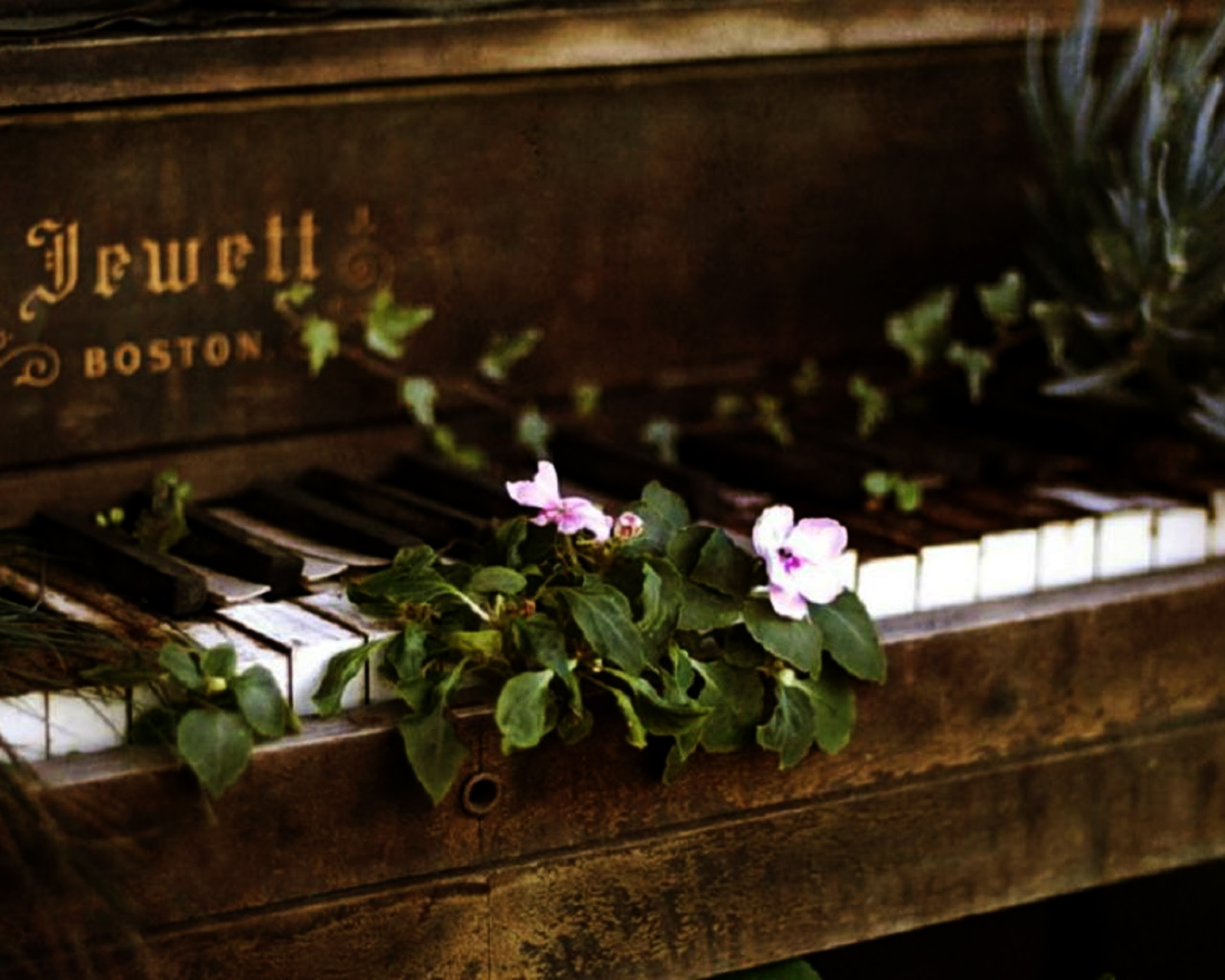 http://4.bp.blogspot.com/-PMtb0tFFrhc/UGhDTTgH1II/AAAAAAAAE8M/F546SwB1FB4/s1600/Jewett-Vintage-Piano-Flowers-on-Keyboard-HD-Wallpaper--Vvallpaper.Net.jpg