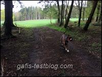 Amy unterwegs im Wald