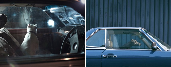 Notes from the Pack - a dog blog. Photographer Martin Usborne's haunting pictures of Dogs in Cars.