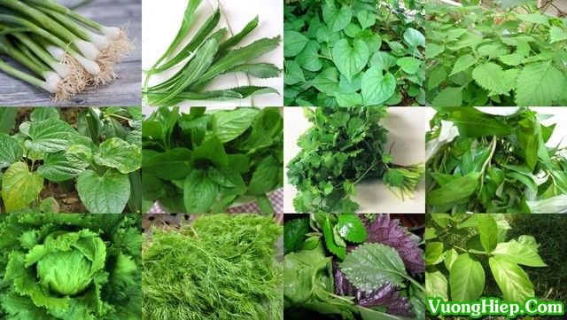 Tác dụng chữa bệnh ít biết của các loại rau thơm