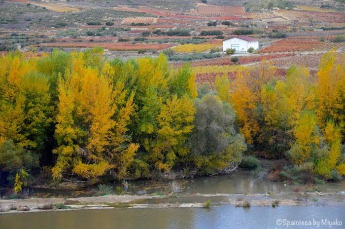 El Tren del Vino de La Rioja 北スペイン・リオハの紅葉する葡萄畑とエブロ川をワイン列車の車窓から