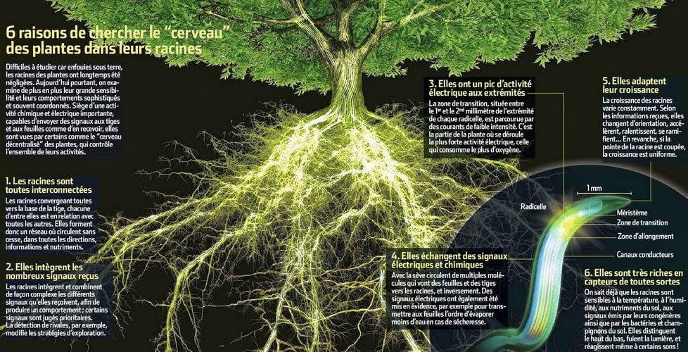Permafor t la sylvoth rapie bien tre avec les arbres for Recherche sur les plantes