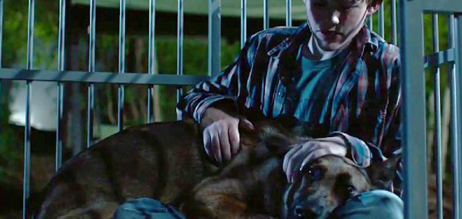 Max traumatizat după moartea partenerului şi stăpânului său