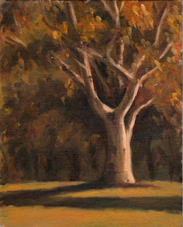 Oil painting of a lemon-scented gum partially illuminated by late afternoon sunlight.