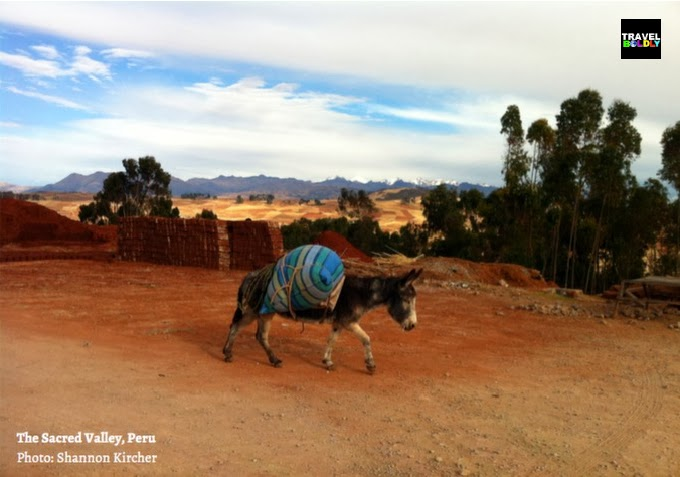 A burro in the Urubamba River / Sacred Valley Peru  Photo: Shannon Kircher for TravelBoldly.com