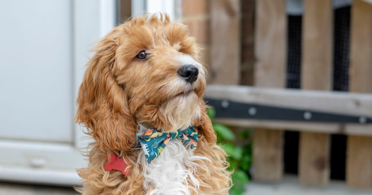 From Sarah Lex: How Our Dog Helps Our Mental Health