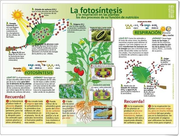 LA FOTOSÍNTESIS (Infografía de Ciencias Naturales)