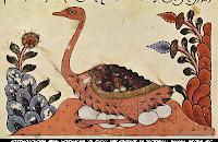 Avestruz Árabe