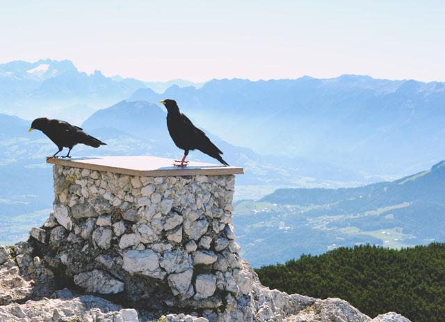 Untersberg ravens