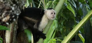 https://bio-orbis.blogspot.com.br/2014/02/plantas-repelente-e-macacos-prego.html