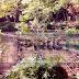 Ηπειρος: Ισχυρό πλήγμα στο καρτέλ των ναρκωτικών ! Ξεριζώθηκαν χιλιάδες δενδρύλλια  χασίς στην Αγία Μαρίνα ![ΦΩΤΟΓΡΑΦΙΕΣ]
