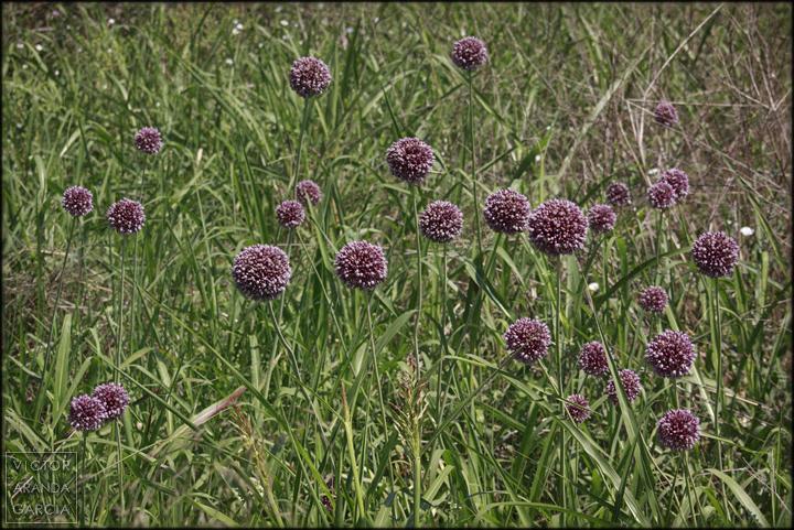 fotografía, naturaleza, murcia, flores, campo