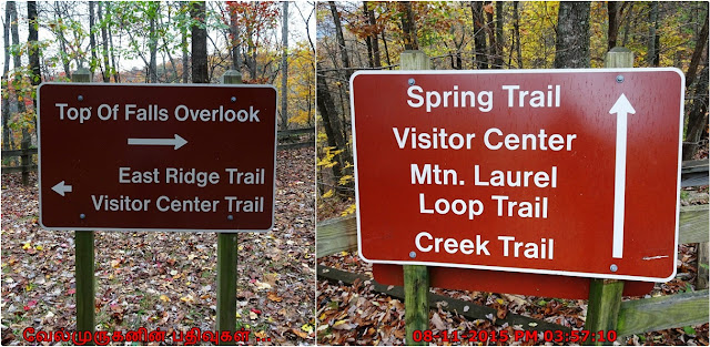 Trails in  Amicalola Falls State Park