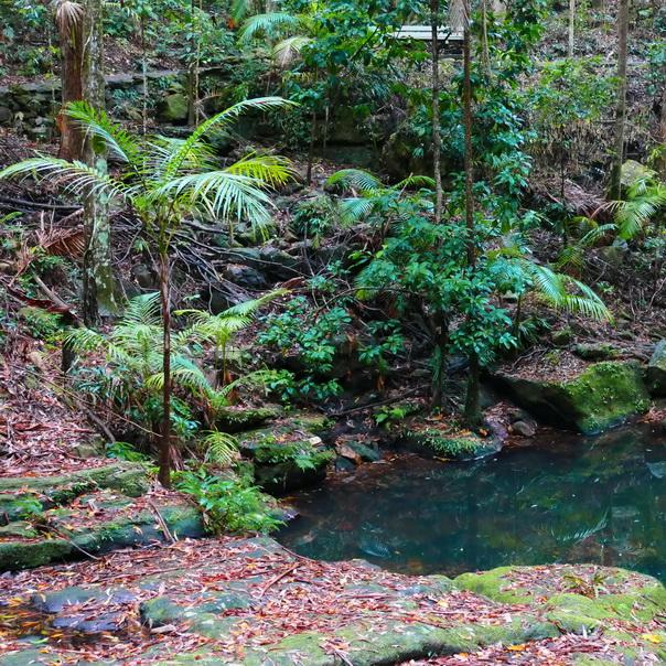 Regenwald Kondilla Falls Tümpel See Palme