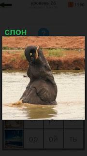 слон из воды поднял высоко голову и свой хобот