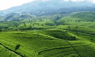 obyek wisata bukit kemuning