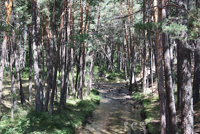 Río Revinuesa (Vinuesa, Soria) by Susana Cabeza