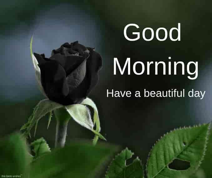 good morning images with black rose