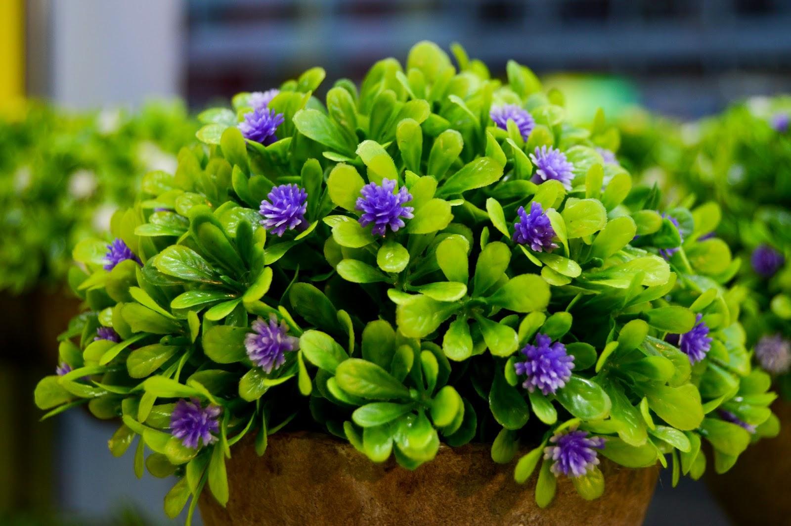 Purple Flowers Green Leave vase free wallpapers