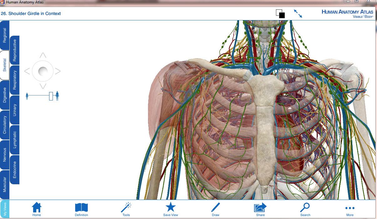 visible body human anatomy atlas v3 0.1 español