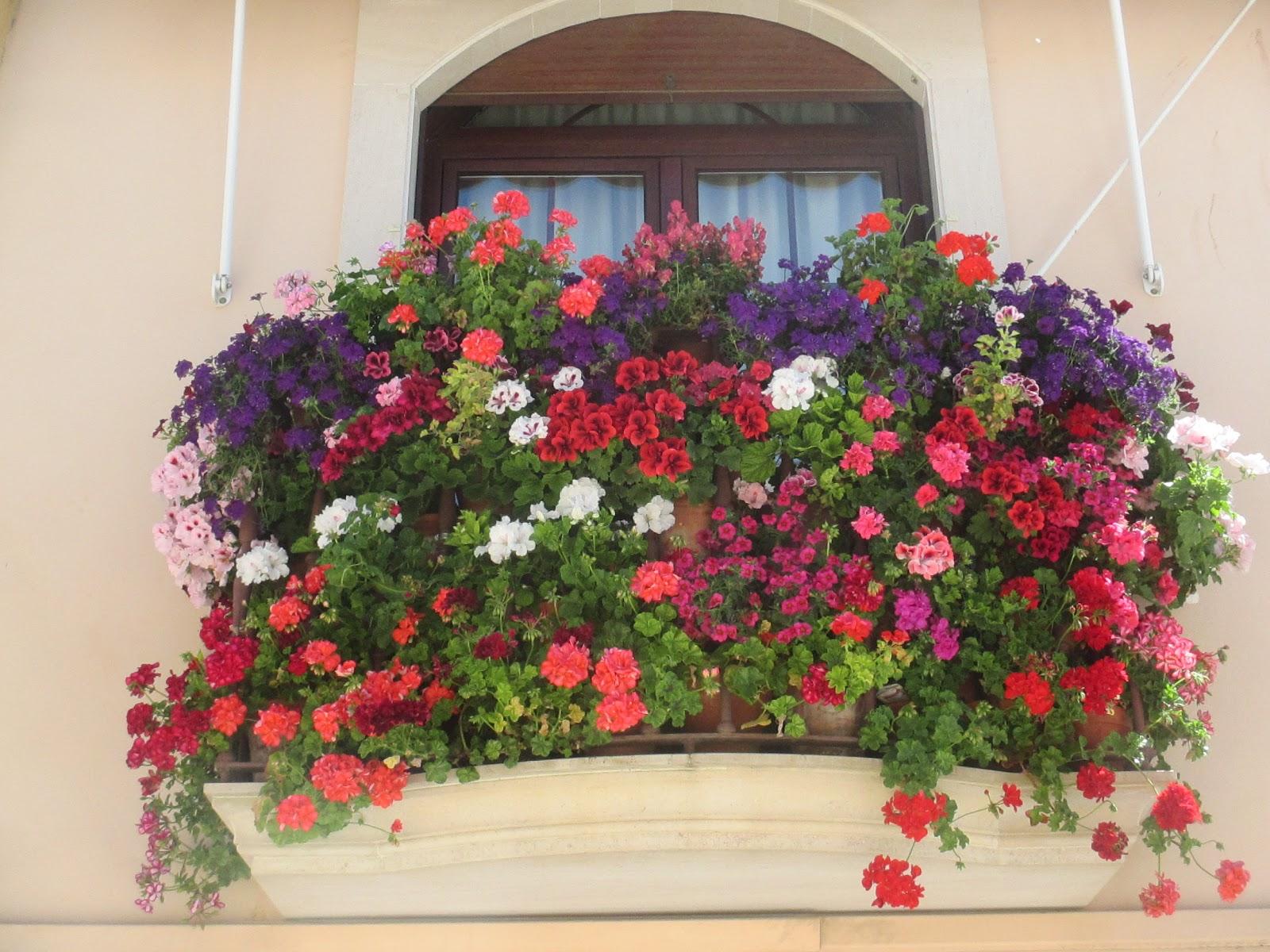 Basket Fernan Nunez Informacion Rejas Balcones Flores Fernan - Fotos-de-balcones-con-flores