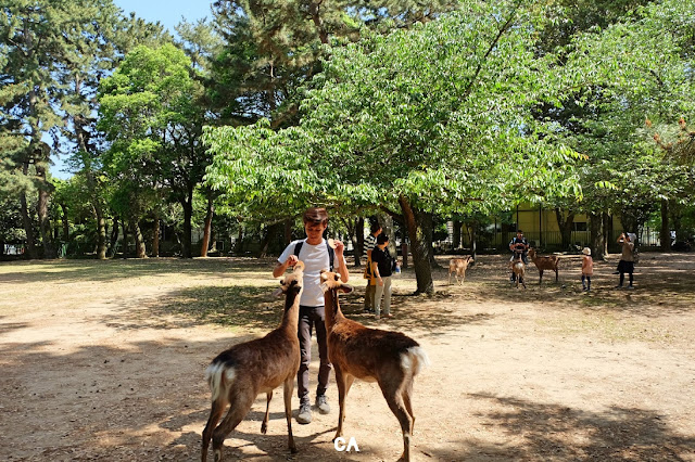 Nara Prefecture Japan Deer Curitan Aqalili