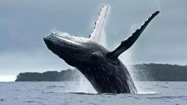 Φάλαινα παραλίγο να καταπιεί δύτη στη Νότια Αφρική (βίντεο)