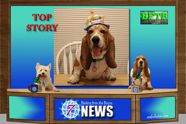 BFTB NETWoof News Top Story Bentley's Birthday