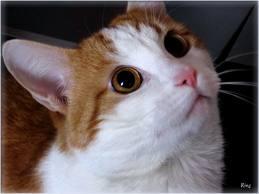 اجمل قطط %D9%82%D8%B7%D8%B731