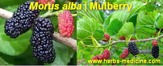 benefit Morus alba for Hypertension
