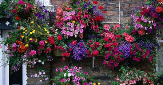 10 Best Flowers for Hanging Baskets in a Garden