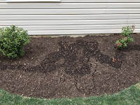 big side yard mulch bed