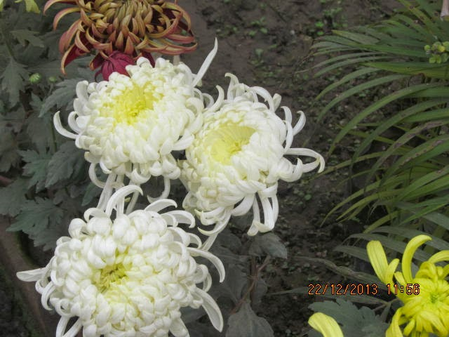 magic flower in blooming - photo #17