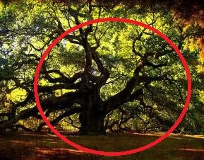 6 Pohon Unik Bikin Gempar Netizen!