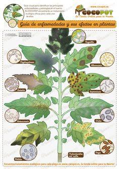 El rincon de un jardin - Enfermedades de las plantas de interior ...