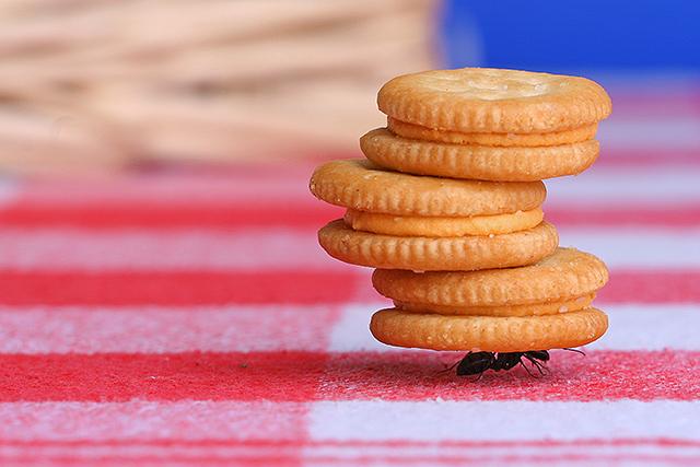 Subhanallah! Inilah 7 Foto Yang Membuktikan Bahwa Semut Itu Sangatlah Kuat