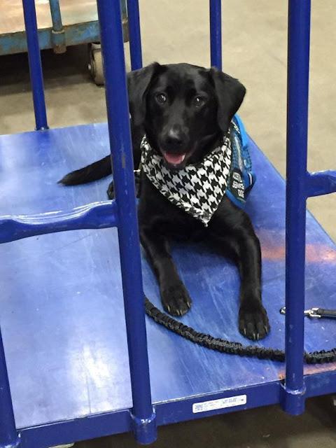 Chú chó đáng yêu được chụp hình và đăng lên album kỷ yếu trường ngay cạnh ảnh của cậu chủ nhỏ