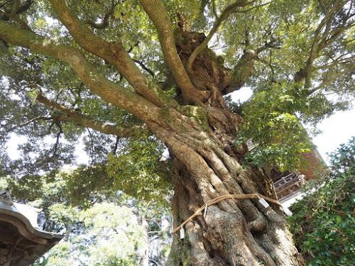 とにかく椎の木が多い