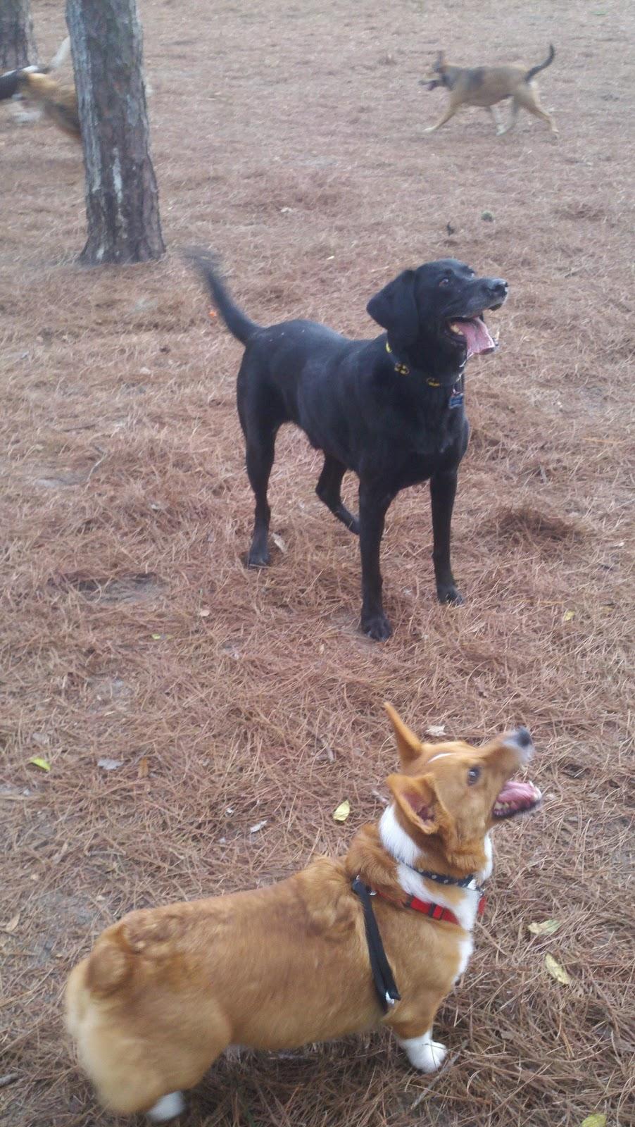 Dog Doesnt Bark After Netured Yahoo Answers